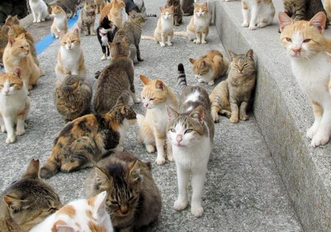 cat-island-800-1.jpg